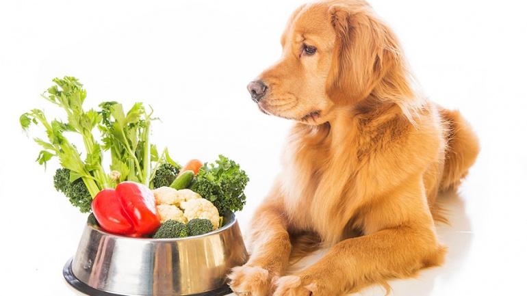 Dieta cetogénica para perros con epilepsia